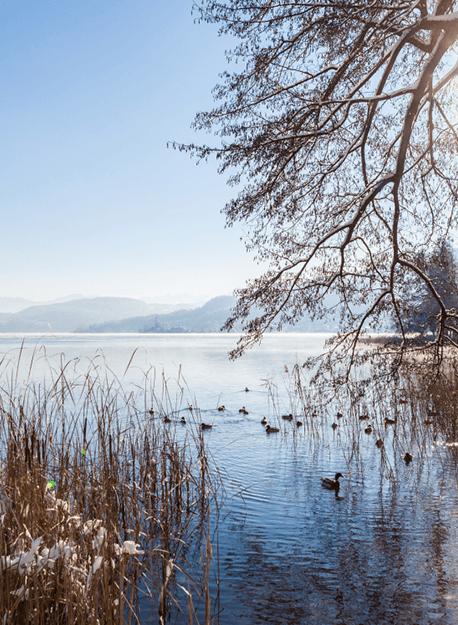 Neujahr am See